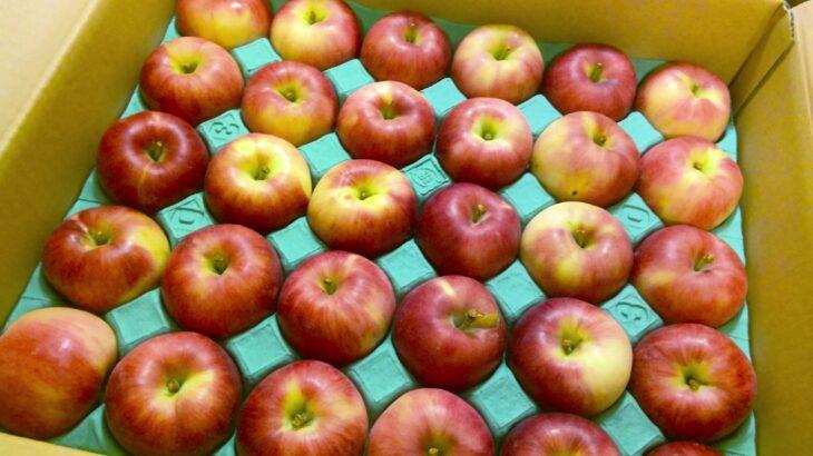 長野県からリンゴと梨が届きました